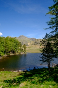 Pine Trees and Tarn