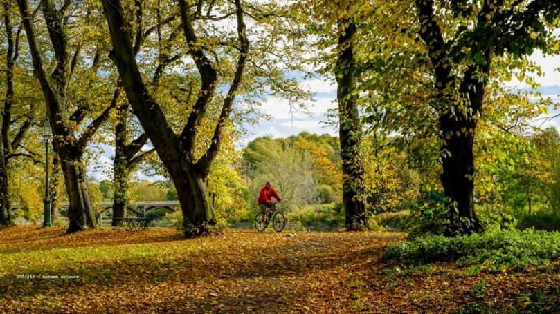 Preston, United Kingdom. 26th October 2016. Magnicent autumn col