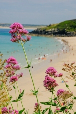 Pink flowers overlooking Porthminster Beach at St Ives in Cornwall