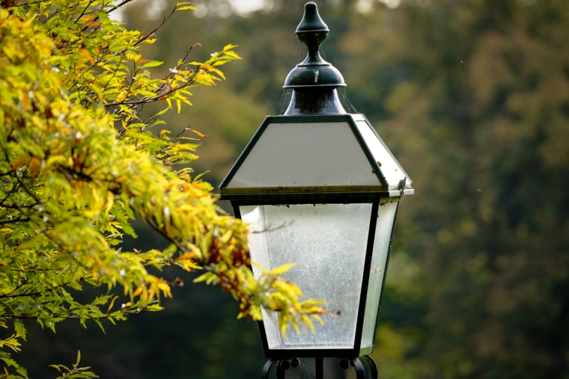Autumn Avenham Park-1804