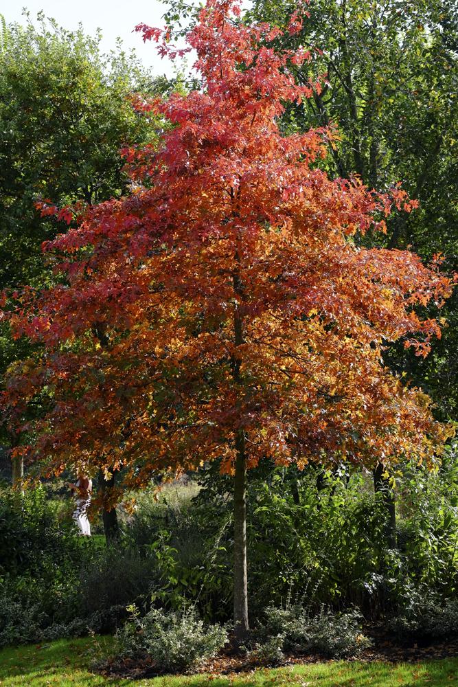 Autumn Avenham Park-1810