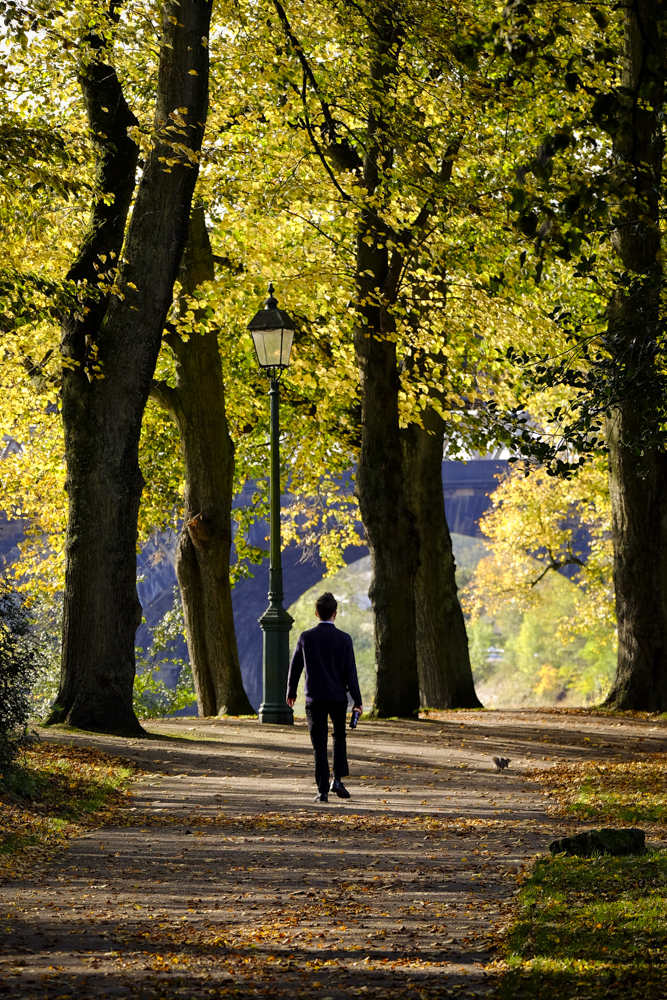 Autumn Avenham Park-1827