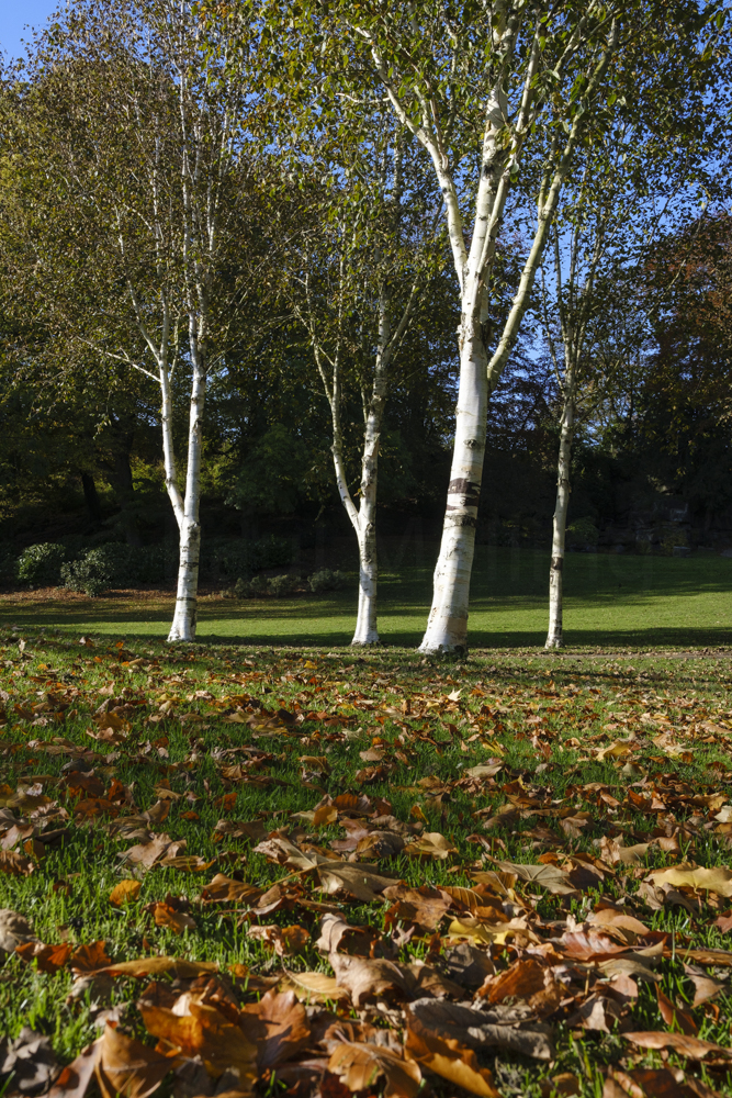 Avenham Park Autumn-4572