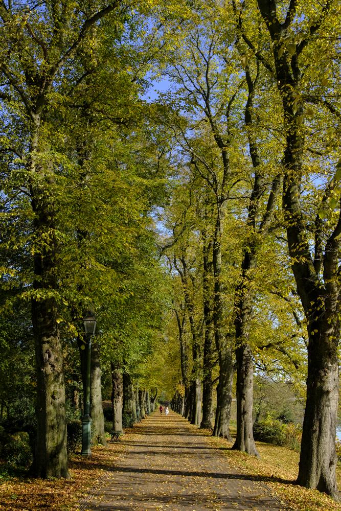 Avenham Park Autumn-4589