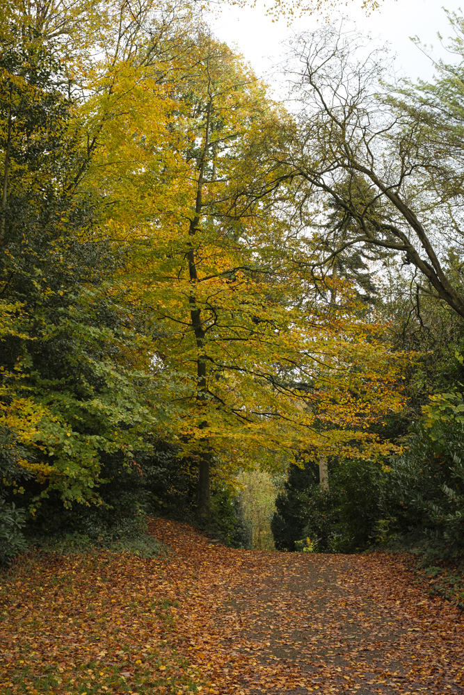 Cuerden Park-4825