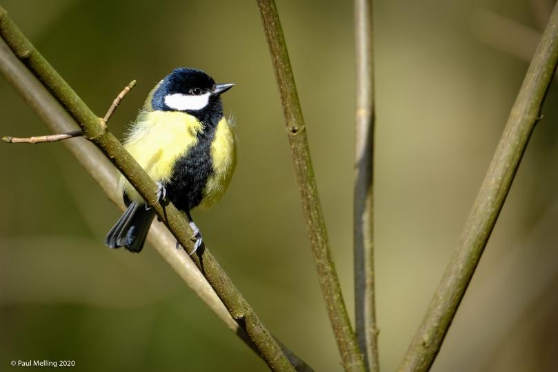 Birds-0963
