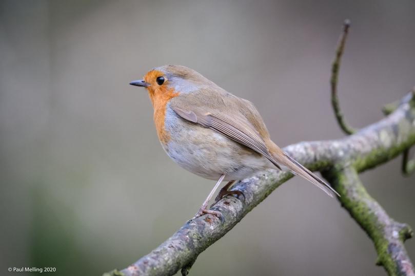 Birds-1017