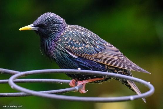 Birds-2046