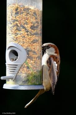 Birds-2104