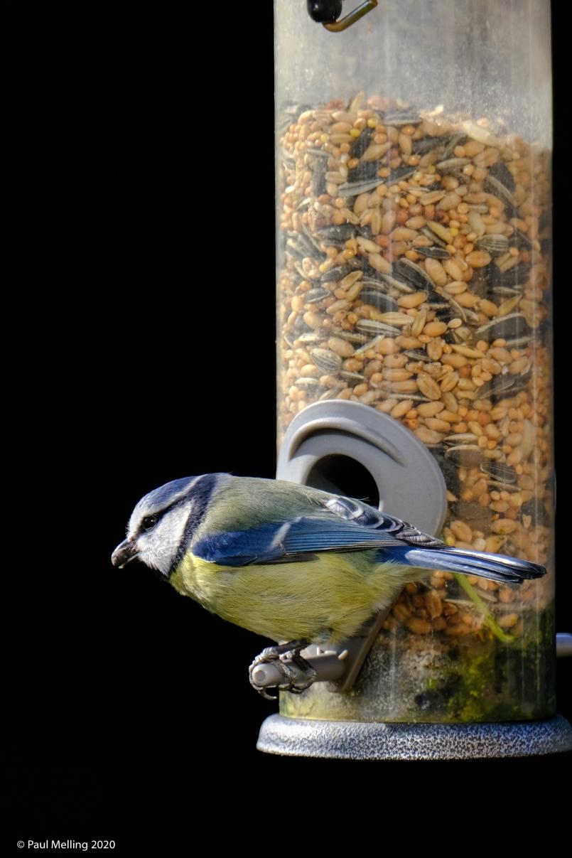 Birds-2117