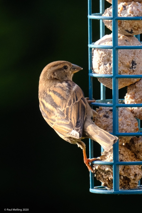 Birds-2401