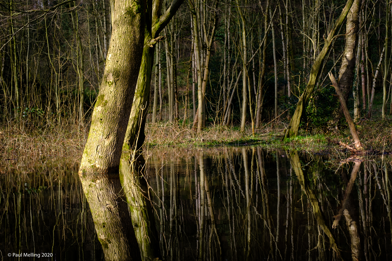 Waterlogged Woodland