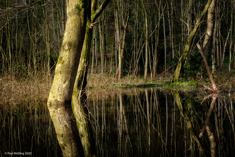 Waterlogged Woodland